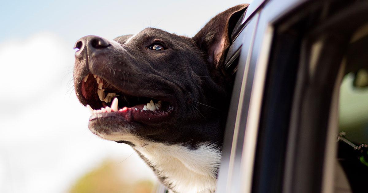 Rejse med hund og forebyggelse mod parasitter
