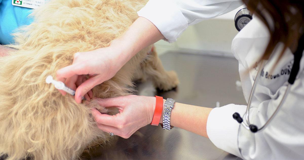 Vaccination af kæledyr